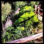 Precioso paseo que bordea el río y al que se accede desde el patio de las casas.