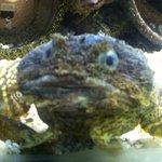 Woods Hole Aquarium