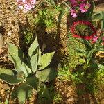 Hidden surprises at the Hacienda Linda