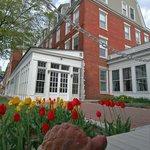 Spring tulips - Inn garden
