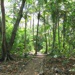 The trail to LCB&B