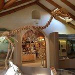 Giant skeleton :)