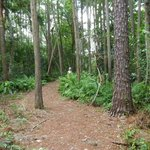Nature preserve trails