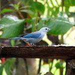 birds feeding there