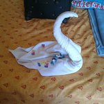 swan and sweets left for my birthday by maid