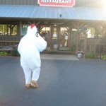 Halloween at Pam's...Chickens eat free Chicken