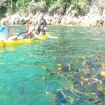 kayak over to fish cove