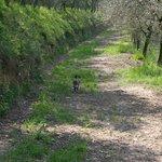Passeggiata nell'oliveto