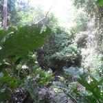 Exuberante vegetación - vía al camping