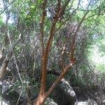 Abistamiento de árboles vía al camping