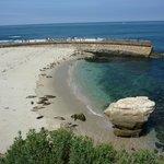 Sea pier to watch seals