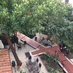 vue sur le jardin intérieur depuis la chambre