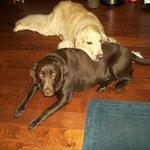 Bailey and Brandy Eschenbrenner
