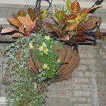 Great hanging planters!