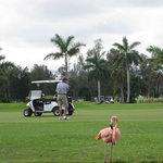 Flamingos flocking on hole #2