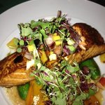steelhead salmon