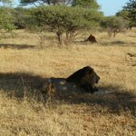 King of Madikwe