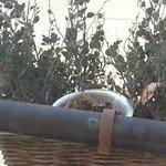 Overvolle asbak in plantenbak op balkonnetje (rook je op de kamer)