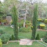 More backyard