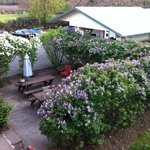 Michaels room looks over the back yard and valley - Lilac patio in late march