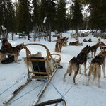 One can have an own dog-sleigh ride near by