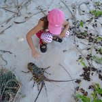Crayfish catch of the day