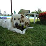 I nostri cani a bordo piscina