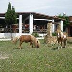 parc infantil con ponis