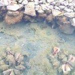 Conch Pond