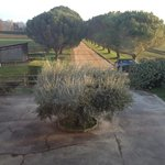 Cour intérieure avec magnifique olivier