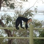 Royal suite balcony. Capuchins were always hanging around...