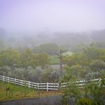 Foggy morning at the vineyards.