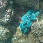 Bright clams