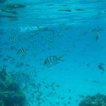 Deep coral garden