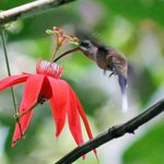 Birdwatching tour $35