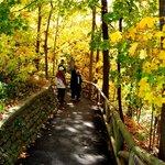 Walkways in the Fall