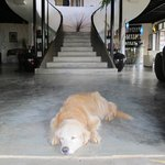 Pooch Taking In The Cool Concrete Floor At ViewPoint