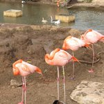 Flamingos and Ducks