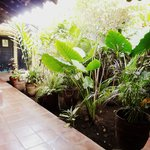 Typical courtyard style restaurant with a lovely garden