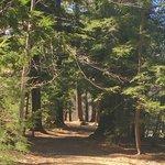Phillips Exeter Trail