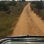 Lionesses on the gravel road to Gorah