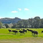 The polo field and ponies