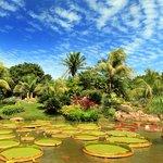 Hermosa laguna con Victorias Amazónicas