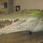 Foam Latex Alligator Head From Peter Pan Movie