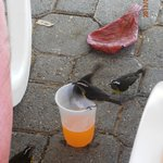 watch your drinks, finches love them :)