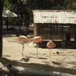 aves varias, flamencos