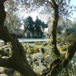 Au milieu des oliviers ...