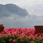 Geraniums with a view