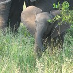 One of many babies we saw on game drive