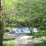 The weir in plymbridge woods